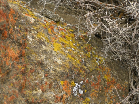 Fort Rock Yellow and Orange Moss