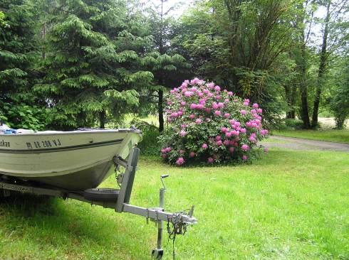 Blooming Bush at Camp (and Boat)