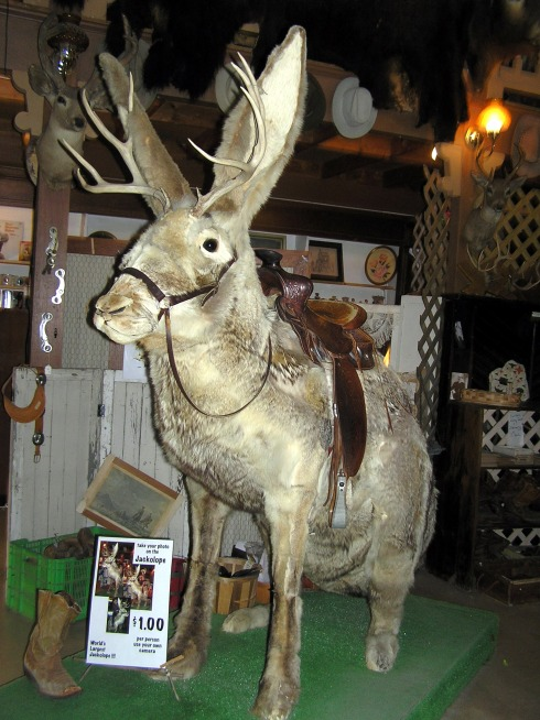 Jackalope at the Cowboy Museum.