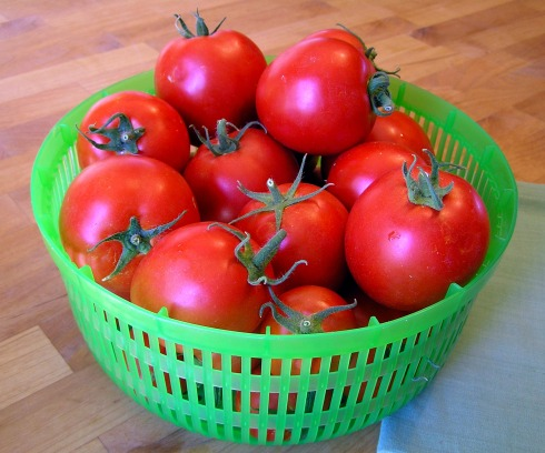 Basket of Ripe Tomatoes
