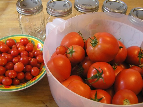 Fresh-Picked Tomatoes