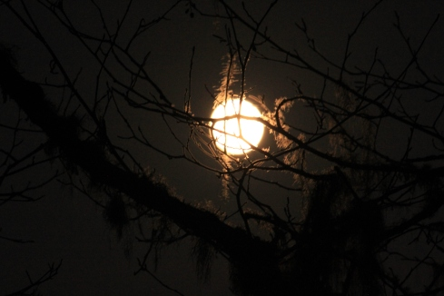 Cool full moon photo through the trees