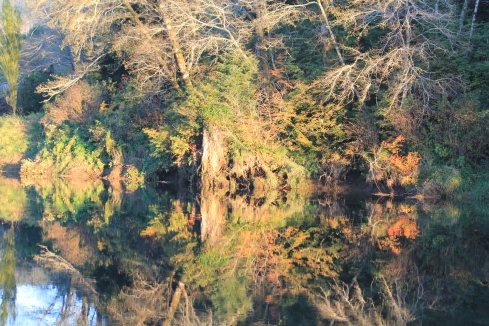 Trees reflecting off Siletz River