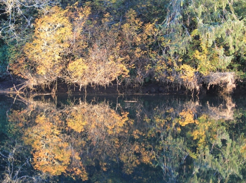 Trees Reflecting on Siletz River