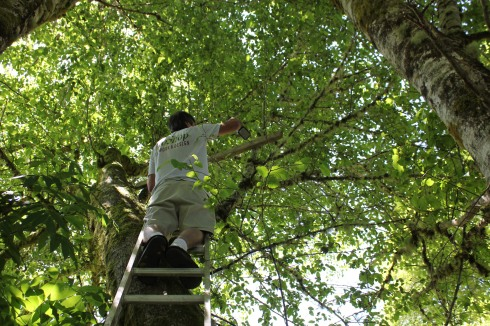 Paul Screwing in the 2x4 to Hold the Owl Box