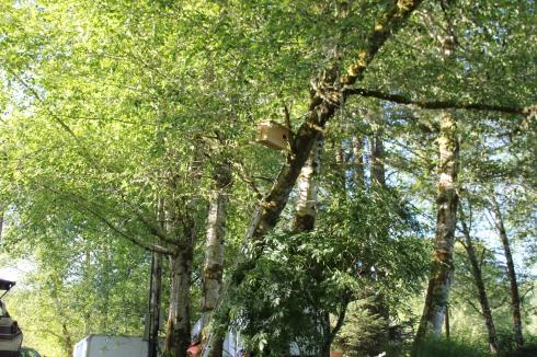 Barn Owl Box Almost in It's Final Spot
